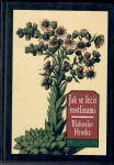 Jak se léčit rostlinami - Hruška